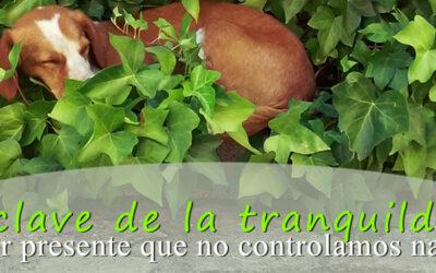 Control espiritual