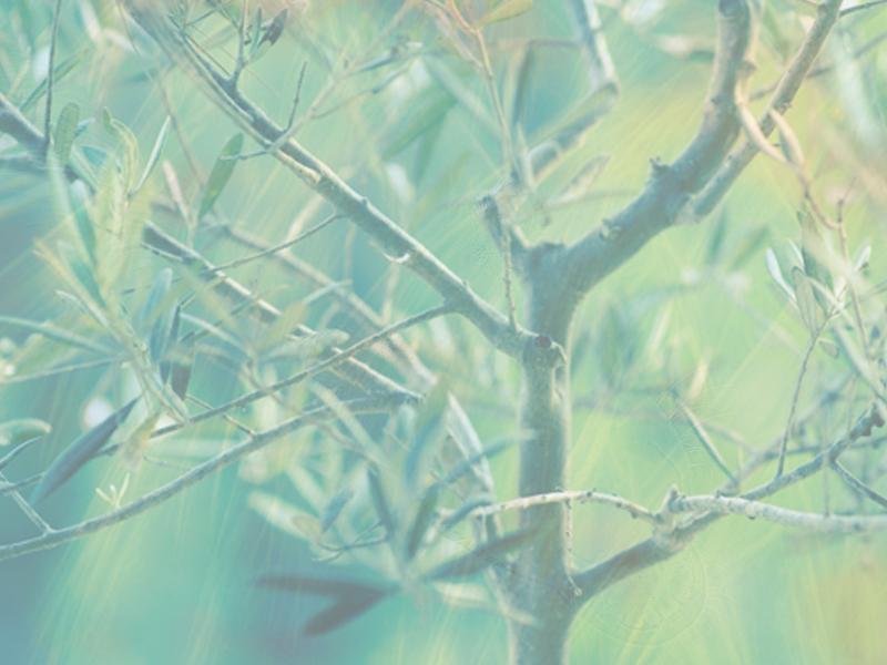 Árbol psicogenealógico y transgeneracional