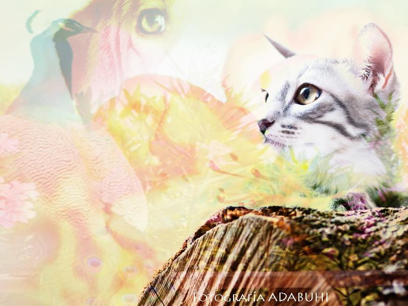 Comunicación con Animales, la sabiduría de la Presencia